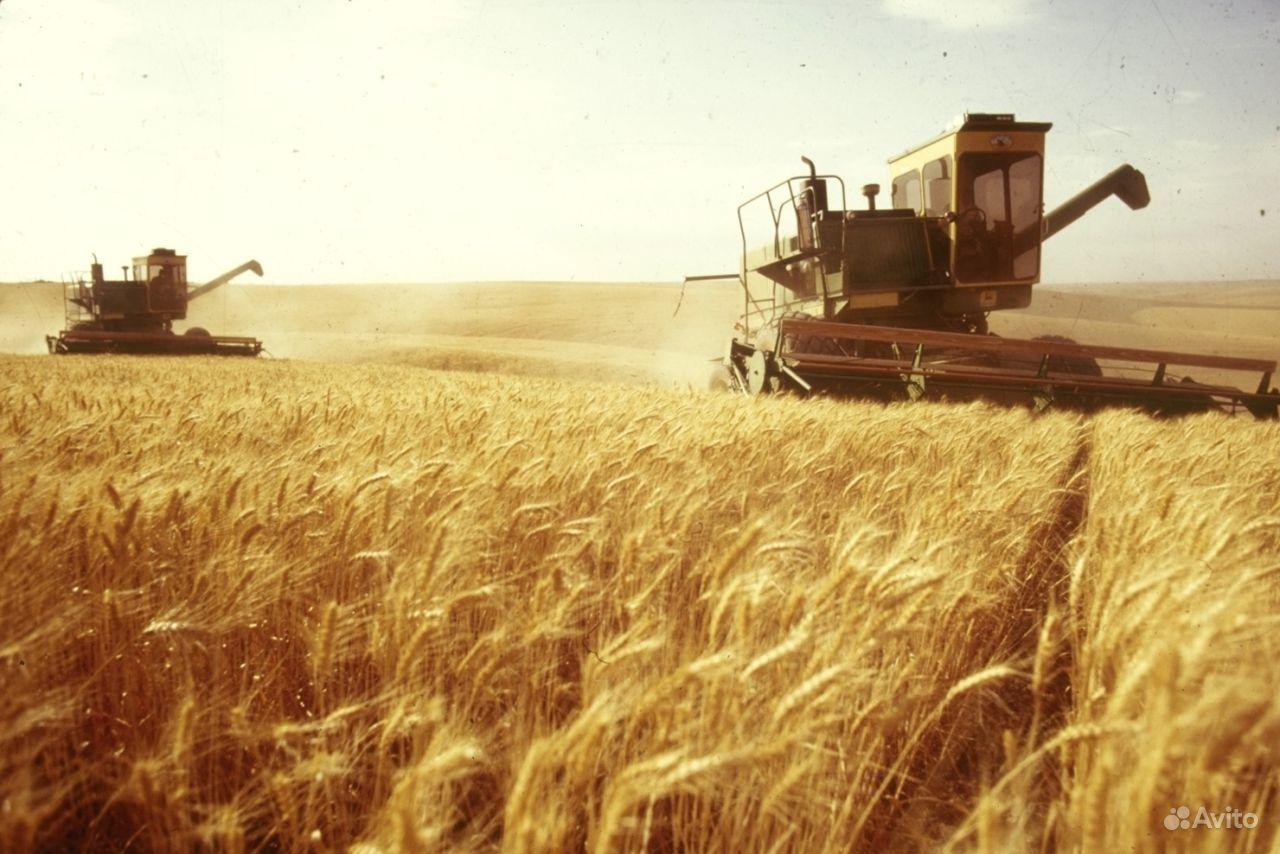 Украина смогла преодолеть экономическую зависимость от России в агросекторе, - Павленко