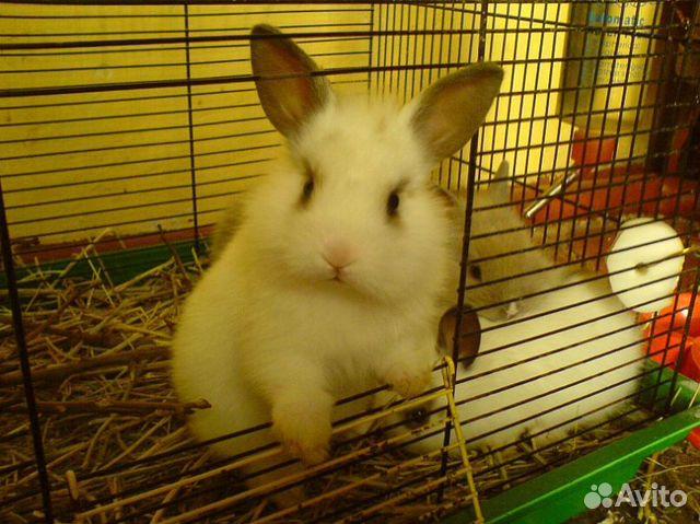 Кролики декоративные (разные окраски и породы), not_specified