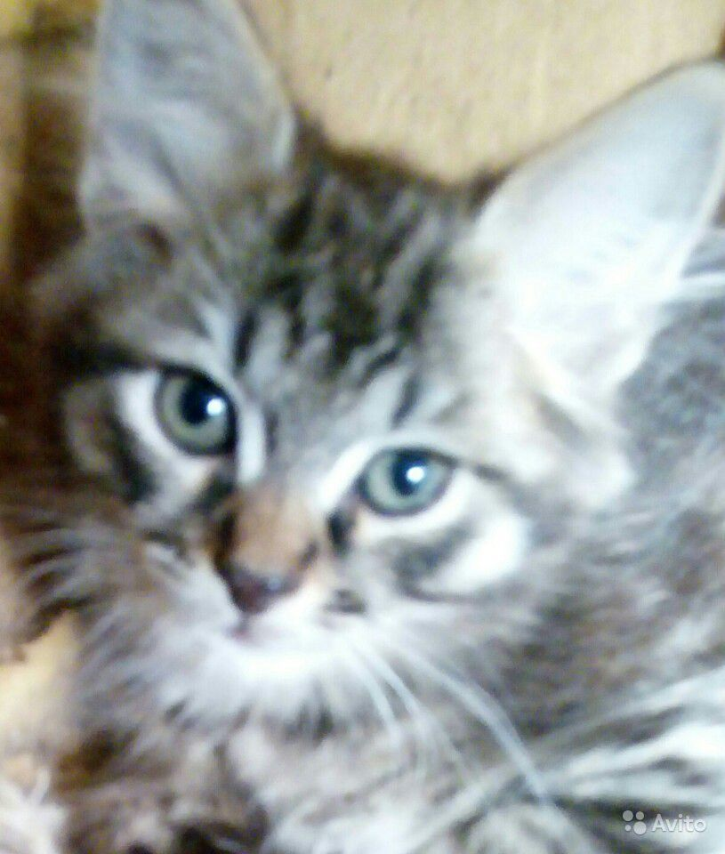 Котенок 2,5 меяца