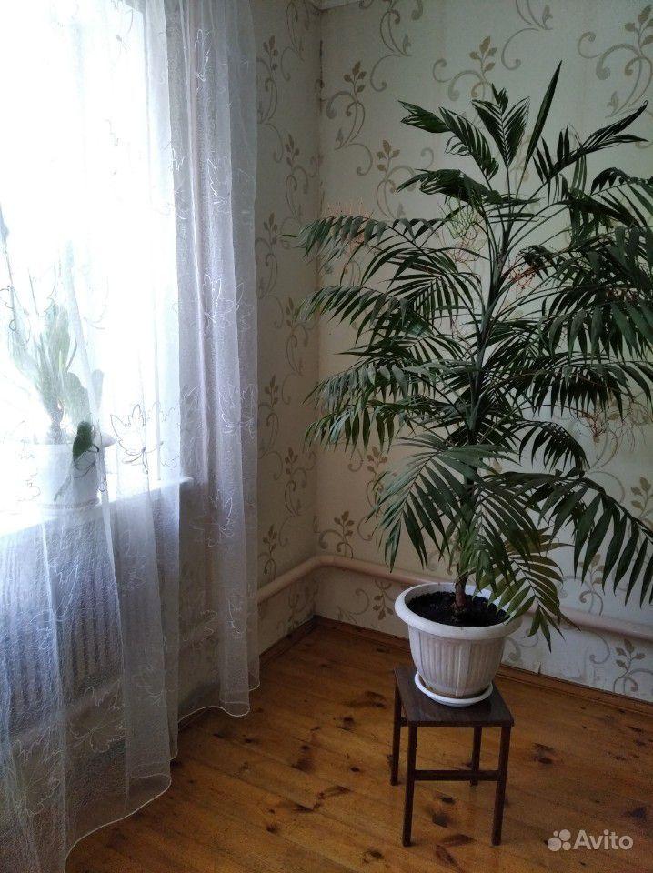 Пальма - красавица цветущая купить на Зозу.ру - фотография № 2