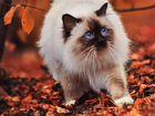 Кошку такую хочу