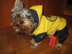 Одежда для маленьких собак частные объявления работа сторож могилев свежие вакансии