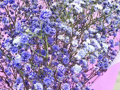 Букет синей гипсофилы