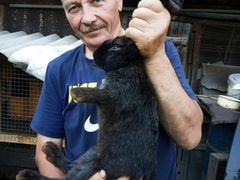 Крольчата 2,5 месяца