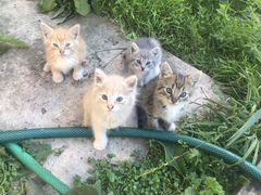Отдам котят в добрые руки )