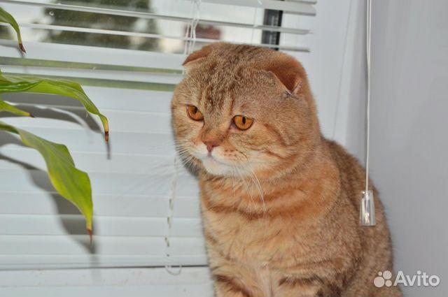 Иваново коты вязка