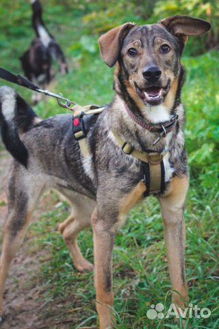 Собака ищет дом купить на Зозу.ру - фотография № 2