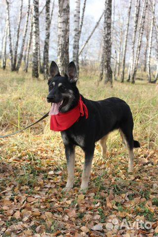 Собака Макс в дар купить на Зозу.ру - фотография № 1