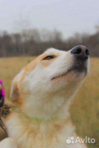 Чудесная собака подросток в дар купить на Зозу.ру - фотография № 4