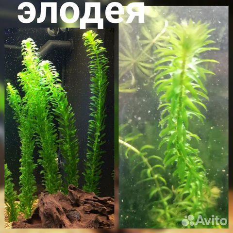 Аквариумные растения - 9 шт  89519173738 купить 2