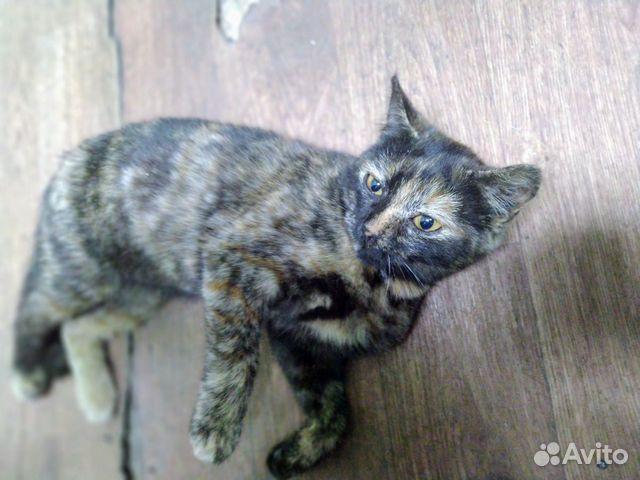 Кошка 89962037035 купить 1