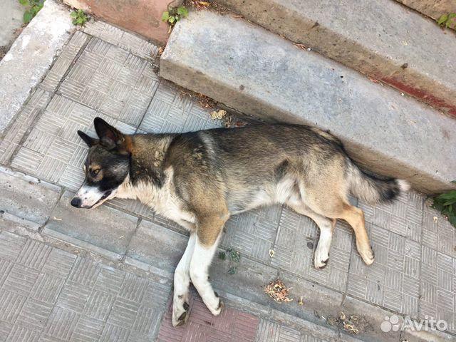 Детские собаки  89372153883 купить 3