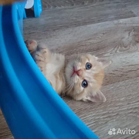 Котята в добрые руки  89272793404 купить 8