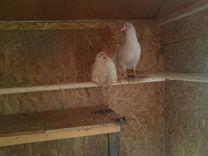 Деревенское куриное яйцо
