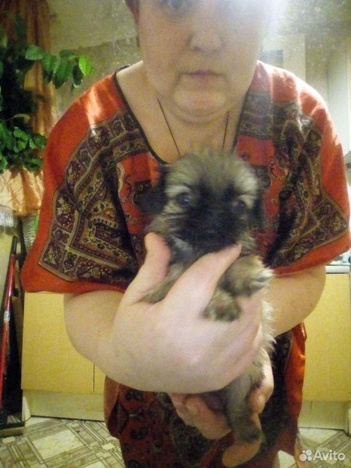 Собака  89014505250 купить 8