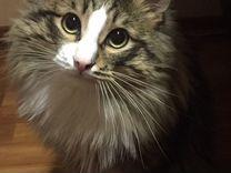Кот для новоселья