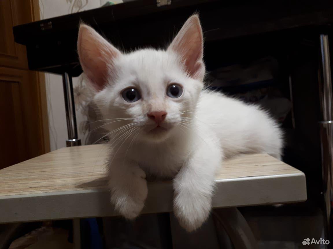 Кошка 89620780609 купить 5