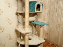 Комплексы и когтеточки для крупных кошек